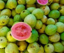 semillas-de-guayaba-o-guava-excelente-germinacion-oferta-D_NQ_NP_835911-MLC20675032781_042016-F